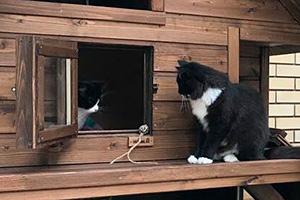 Окно-дверца